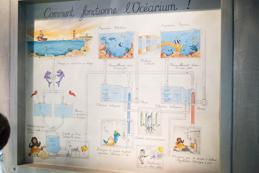 Comment fonctionne l'Océarium ?